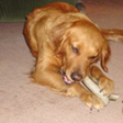 grateful shed,antler dog chews for sale san francisco,deer antlers for dog chews,baltinore antler chews,antler chew dealers,antler chews wholesale,deer antler dog chews,
