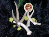 6 pack medium mule deer chews $14.99