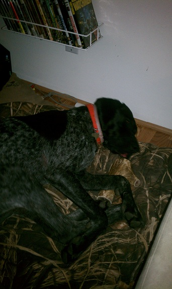 antler dog,antlers for dogs,cheapest antler chews,