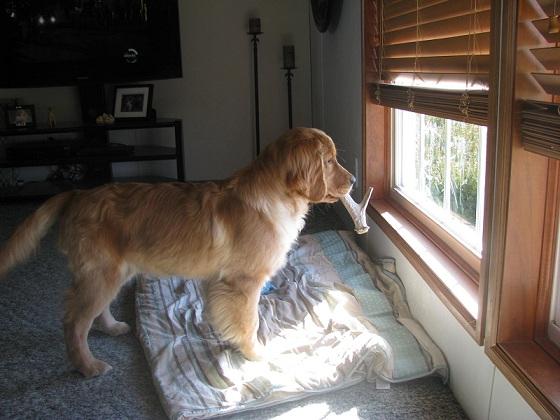 antler chews,antlers for dogs,antlerz,antler chewz,antlerchews.com,grateful shed