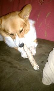 antler dog chews,organic dog chews,elk,deer,wholesale.natural dog treats,grateful shed antlers,