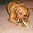 grateful shed,antler dog chews for sale san francisco,deer antlers for dog chews,baltinore antler chews,antler chew dealers,antler chews wholesale,deer antler dog chews,