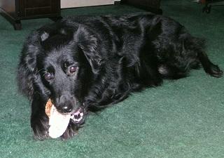 antler dog chews dor sale grand rapids michigan,antler dog chews for sale boston,antler dog bones for sale boston.organic dog treats boston, antler chews boston,antler dog chews for sale worcester,