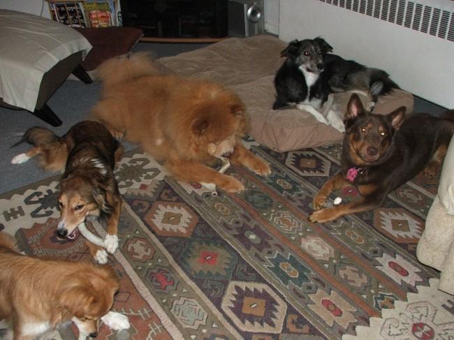 antler dog bones,antlers for sale,antler chews,elk,deer,organic dog food