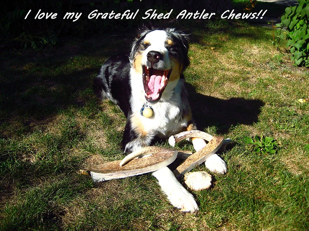 antler chews, antler dog chews, antlers for dogs, wholesale antler chews