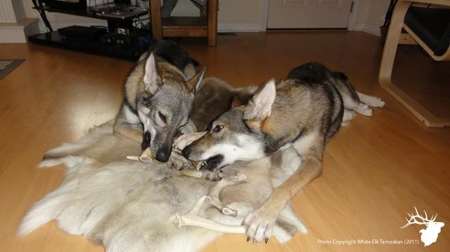 antler dog chews, antlers for dogs, elk antler chews,deer antler dog, moose antler dog chews,