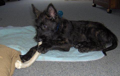 antler dog chews,antlers for dogs, grateful shed, antlerchews.com